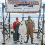 Chapmans catch 100 pound Halibut